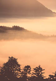 紅豆杉がある山から見おろした風景