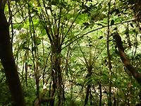 やんばる森の風景