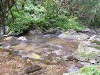 自家農園のすぐそばを流れている小川