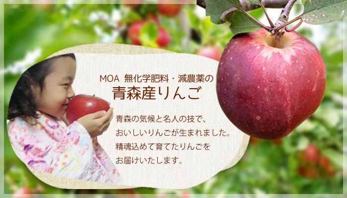 MOA  無化学肥料・減農薬の青森産りんご。青森の気候と名人の技で、おいしいりんごが生まれました。精魂込めて育てたりんごをもぎたてでお届けします