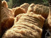 抗菌性に優れたココナッツの繊維
