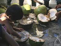 ココナッツは貴重な栄養源