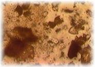 有用微生物群の生息