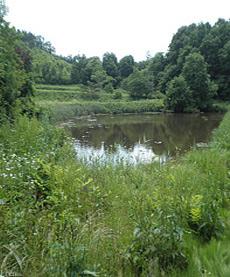 飯舘村 綿津見神社横の野池