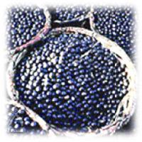 アサイベリーミラクルアイ:ブルーベリーの実よりもっと濃厚な色