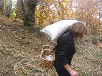 ビッビアーノのお姉さんもお手伝い。はやり温厚な人柄。その彼女、えっちら!と一袋25kgもあるものを担いで下山。いや〜驚きです!