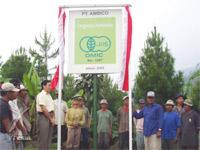 有機明日葉粉末:インドネシア・スラバヤ圃場
