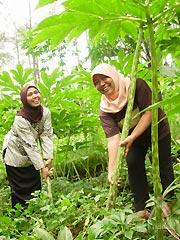 農園で働く女性達
