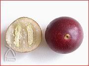 熟した果実。直径2cmほど