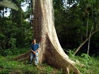 インカインチ・バージンオイル:木
