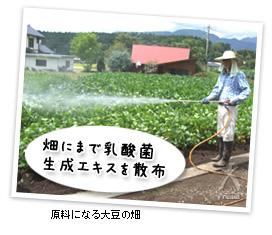 原料になる大豆の畑