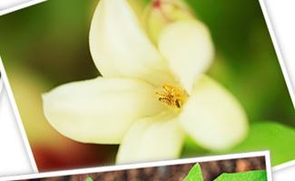 風によって運ばれる花粉を待つ雌花