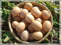 つやつや♪の平飼い卵