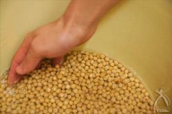 大豆に十分な水を吸わせる