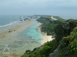 宮古ビデンス・ピローサ:沖縄宮古島