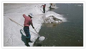 内モンゴル・ジランタイの塩採集の風景