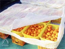 ぬか漬け一年生:天然酵母の採取2