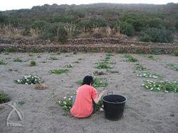 もくもくと・・・収穫作業は手っ取り早く瞑想が出来る