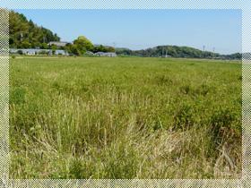田植え前、5月の豪快な田んぼ