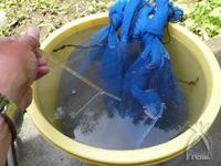 薬は使わず、種を温湯(おんとう)消毒します。約63度で5分程つけてすぐに冷水にさらします。これで、いもち病菌や馬鹿苗病菌などを消毒。