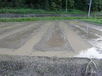 代掻き(しろかき)をして苗床作り。地味な作業ですが、この作業とここに苗を広げていくのが米作りでは一番大変だそう。水位管理などの関係で苗床は限られたところにしか作れないため、苗床にのみ油粕とカキガラ(有機石灰)をそれぞれ40kg入れます。ここ以外では、有機の肥料でさえ入れません。
