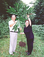 中川智子さんと故・石井正治さん。こんにゃく芋はこんなに大きいんです!