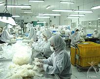 アンビコ社の乾燥こんにゃく製造工場の様子