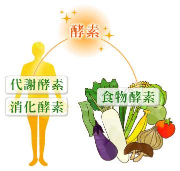 代謝酵素、消化酵素、食物酵素