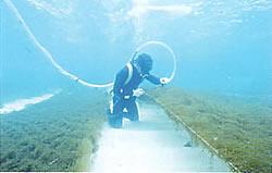 海藻沖縄もずく - フコイダン粉末