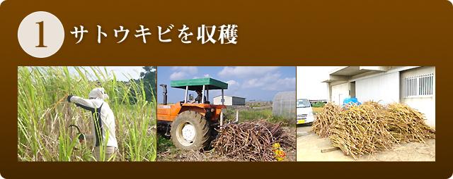 1.サトウキビを収穫