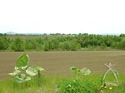 広大な秋場農園(の、ほんの一部)