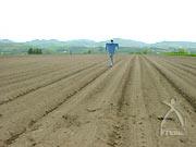 伊藤農園のかかし、伊藤さんそっくり。