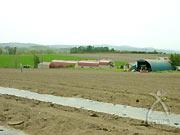 雨の後土が固まって芽が出てこない。