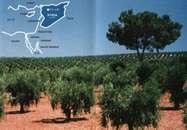 50年前までは砂漠に生える植物を使っていた