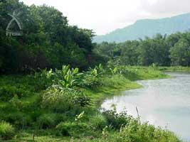 農園の中心にある池