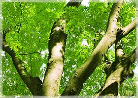 木材素材の機能