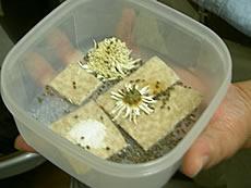 天然成分100%でアリ・ゴキブリ・害虫忌避