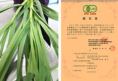 有機栽培の葉にんにく 認定証