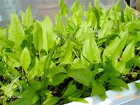 コーラルライフ・サンゴベース:家庭菜園に