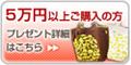 5万円以上ご購入プレゼント