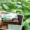 有機種子ECOガーデン/有機家庭菜園セット
