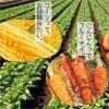 フルーツバスケットの加工野菜(冷凍)
