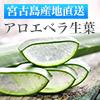 沖縄宮古島産アロエベラ生葉