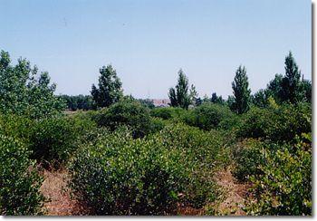 ホホバ畑の眺め