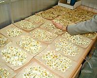 摘み取られた除虫菊