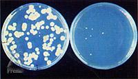 スーパークリーン1番:病原菌も除去