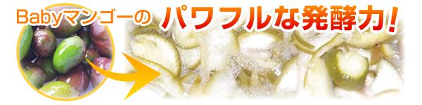 ベビーマンゴーのパワフルな発酵力