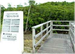 島尻マングローブ林入口