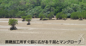 黒糖加工所すぐ脇に広がる干潟とマングローブ