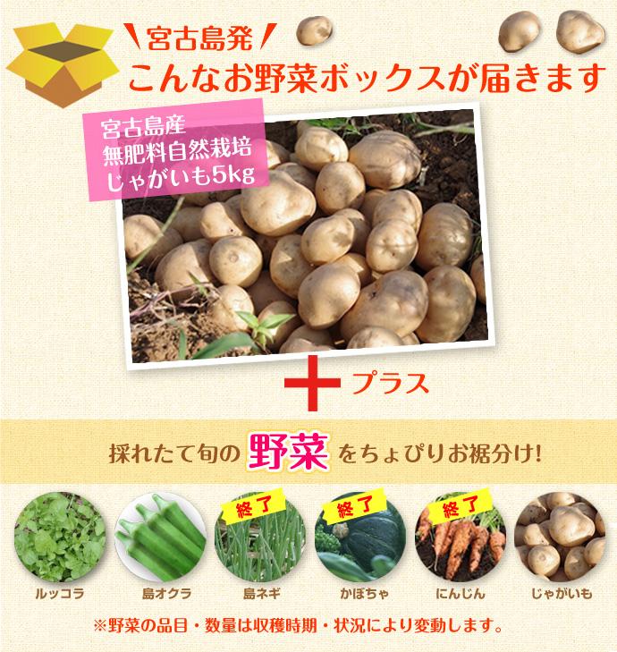 宮古島発 じゃがいも5kg+そのとき採れた春野菜をちょっぴりお裾分けプレゼント!